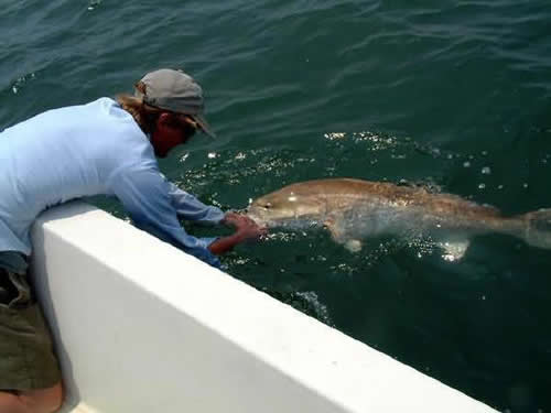 Saltwater Recreational Fishing License Program